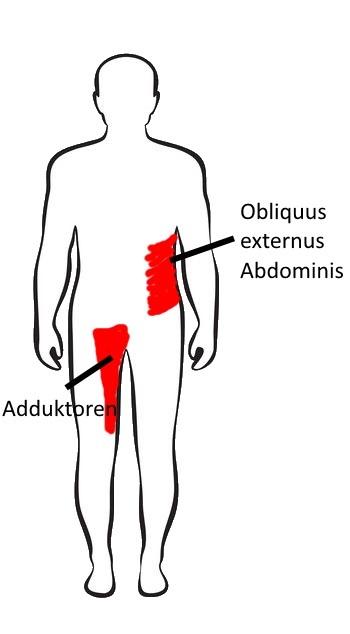 Anterior Oblique Subsystem