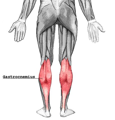 Der Gastrocnemius ist einer der beiden Wadenmuskeln